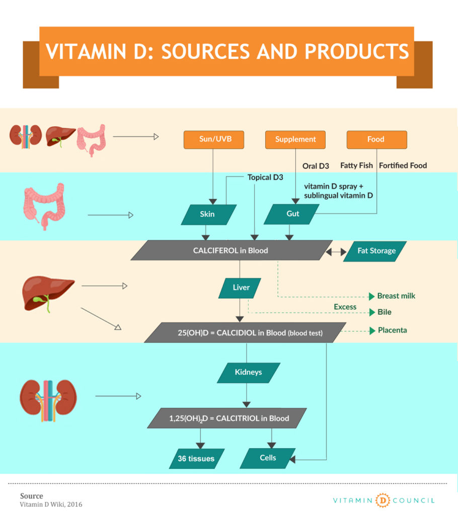 How a Vitamin D Lamp works – SPERTI